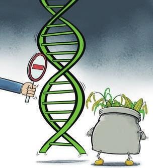 转基因大米的数字标志_