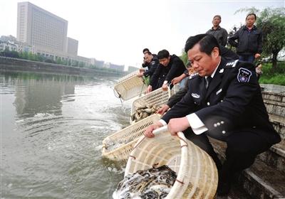 22日,温泉城区淦河双鹤桥段,市水产局渔政处工作人员投放四大家鱼
