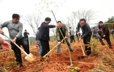 崇阳千名党政机关干部深入农村同群众一起植树造林