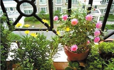冬季室内养花有害健康?