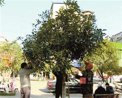 赤壁市园林局组织人员抢抓开春有利时机