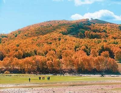 在秋色当中,我最喜欢拍树叶的金黄.