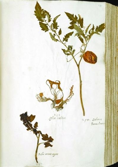 青椒果肉细胞手绘图